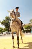 Thinking Horse Stock Images
