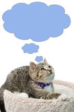 Thinking Kitten. Tabby kitten lying on a cat bed looking up, thinking about something, isolated on a white background Stock Photography