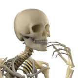 Thinking skeleton Royalty Free Stock Photo