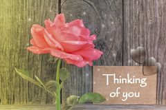 Thinking of you card royalty free stock photography