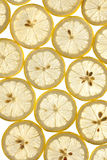 Thinly sliced lemons. On a white background in studio royalty free stock photos