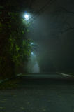 Thiny dimma parkerar in Royaltyfria Foton