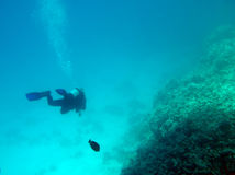 Third dimension in the Red Sea. SCUBA diver exploring Red Sea reef, Hurghada Coast, Egypt Royalty Free Stock Photos