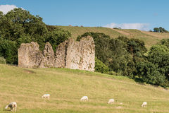 Thirlwall Castle with sheep Royalty Free Stock Photography