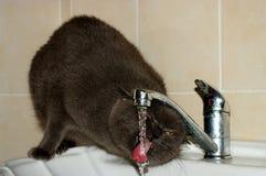 thirst fotografia de stock royalty free