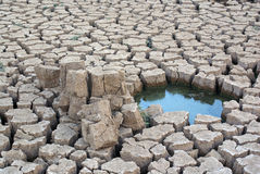 Thirst. The cracked earth and is a little water Royalty Free Stock Photography