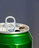 Thirsty stock photography
