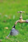 Thirsty. Royalty Free Stock Photo