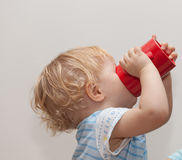 Thirsty baby. Little baby drinking from adult cup while thirsty Royalty Free Stock Images