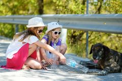 Thirsty black stray dog drinking water from the plastic bottle on hot summer day. Two kids giving cool water to thirsty dog royalty free stock image