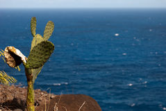 Thirsty Cactus. Thirsty looking cactus staring out at the vast ocean Stock Photo