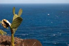Thirsty Cactus. Stock Photo