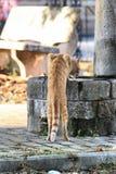 Thirsty cat Stock Photos