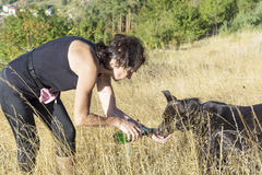 Thirsty dog drinking water in the mountain Stock Image