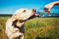 Thirsty dog in hot day Royalty Free Stock Image