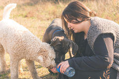 Thirsty dogs. Drinks some water from their trainers hand Royalty Free Stock Photo