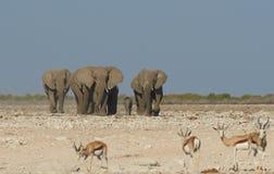 Thirsty Elephants Royalty Free Stock Image
