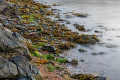 Vibrant Shoreline On Cape Breton In Nova Scotia, Canada. Thirsty seaweed awaits the coming of high tide at the shore of Great Bras D`Or on the island of Cape stock photos
