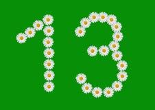 Thirteen. Number thirteen made in daisy flower Royalty Free Stock Photo