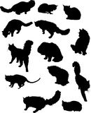 Thirteen cat silhouettes Royalty Free Stock Photos