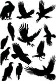 Thirteen eagle silhouettes Royalty Free Stock Image