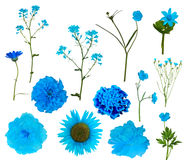 Thirteen light blue isolated flowers collection Royalty Free Stock Images