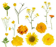 Thirteen yellow isolated flowers collection Stock Photography