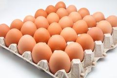 Thirty eggs Stock Photos