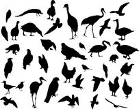 Thirty eigth bird silhouettes Stock Photography