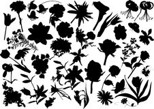 Thirty four flower silhouettes Royalty Free Stock Photo