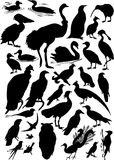 Thirty one bird silhouettes Stock Image