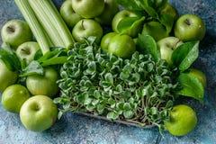 Thistle молока microgreen и зеленые плоды на конкретной предпосылке Программа вытрезвителя, план диеты, потеря веса стоковые изображения rf