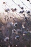 Thistle светлого тонового изображения абстрактный стоковое фото rf