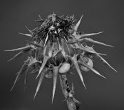 Thistle. With snails in B&N Stock Photography