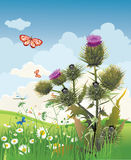 Thistle. Flower bloomed in the summer field stock illustration