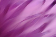 Thistle Abstract royalty free stock image