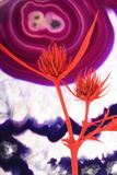 Thistle with agate background Stock Photos