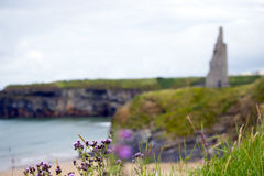 Thistle at beach cliffs and castle. Scenic view with thistle at beach cliffs and castle of ballybunion beach county kerry ireland Royalty Free Stock Photography