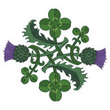 Thistle and Clover. The symbols of Ireland and Scotland. Twisted clover and Thistle vector illustration