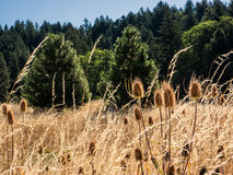 Thistle and dried grass field Stock Photos