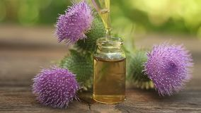 Thistle essential oil in  beautiful bottle on table. Thistle essential oil in  beautiful bottle on a table stock video