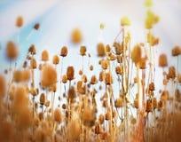 Thistle field - burdock field Stock Photo
