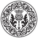 Thistle flower and ornament round leaf thistle. The Symbol Of Scotland Royalty Free Stock Photos