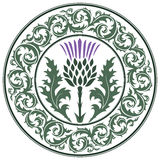 Thistle flower and ornament round leaf thistle. The Symbol Of Scotland. On white, vector illustration Royalty Free Stock Image