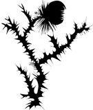 thistle  silhouette Royalty Free Stock Photos