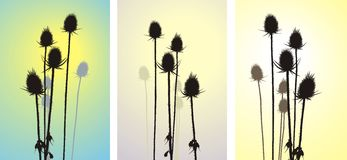 Thistle, vector illustration. Vector illustration silhouette of thistle on beige background Stock Images
