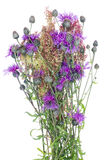 Thistle wild bunch Stock Images