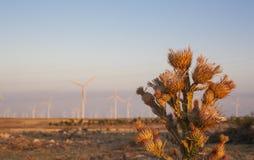 Thistle at wind turbines farm on arid landscape Stock Photos