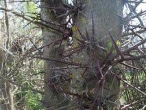 Thistles в лесе Стоковая Фотография RF