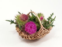 Thistles in the basket Stock Image